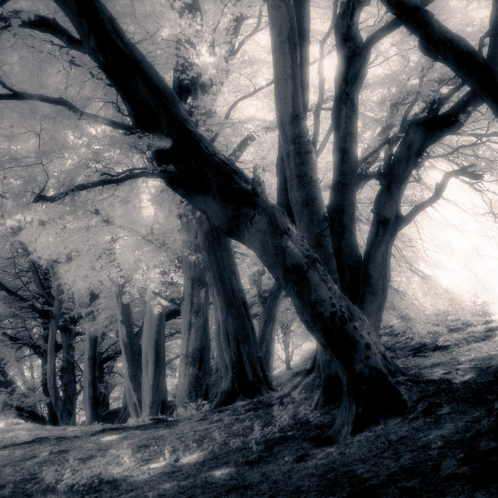 cavehill-trees-2