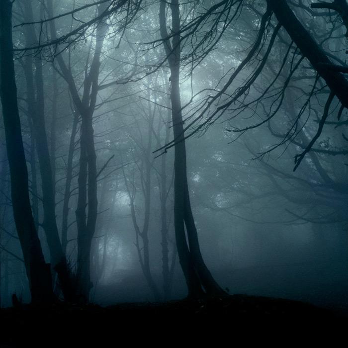 cavehill-trees-fog-1