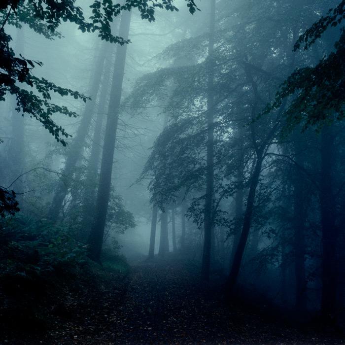 cavehill-trees-fog-2