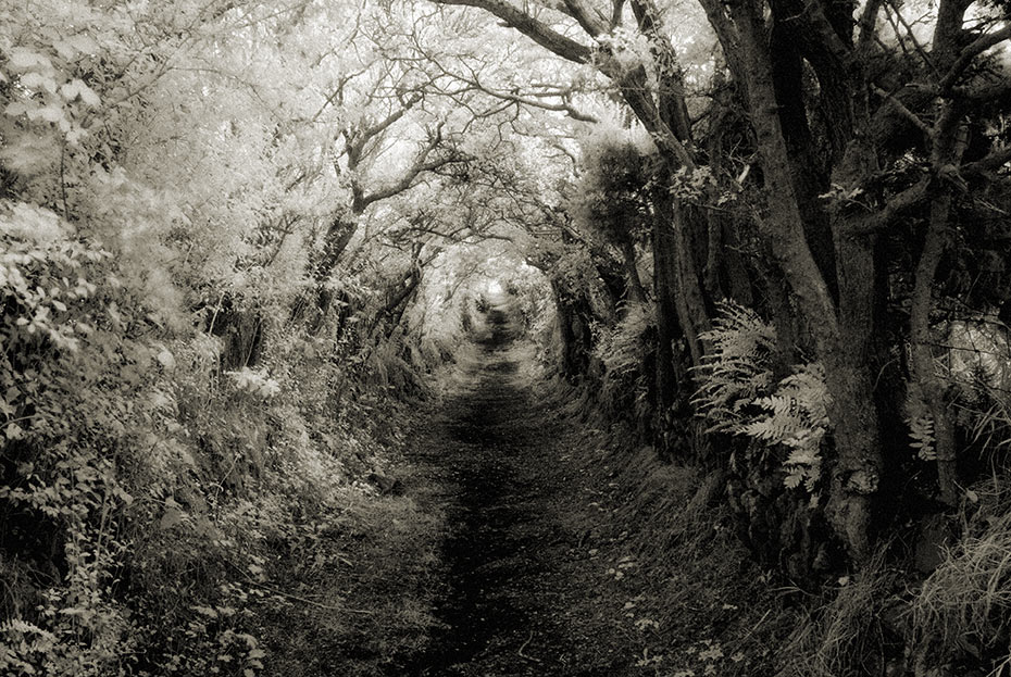 The enchanted path